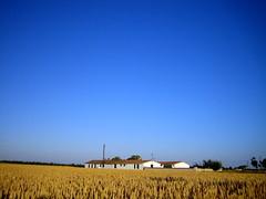 Countryside (Michaela Edwards) Tags: blue france field catchycolors landscape countryside poitoucharentes leboisplageenré cmwd cmwdblue