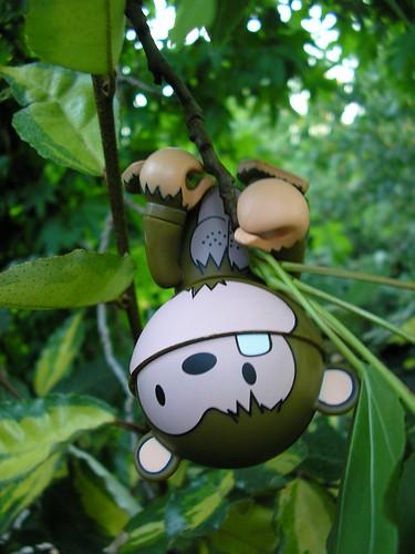 Monkey climb tree