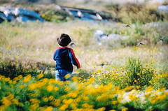My chilhood field (TaMiMi Q8) Tags: flower color bird field childhood yellow kid dof child kuwait bader q8 naturesfinest tamimi