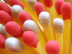 another match point (bitzi  ion-bogdan dumitrescu) Tags: wood pink red wallpaper sun white color colour macro love kitchen yellow glitter silver wow top20favorites fun fire gold golden interestingness sticks interesting bravo shiny colorful flickr glow dof shine topv1111 sunny explore burn round match stick colourful matches topf150 today spark rounded catchy interestingness2 straightflush flamable topc150 matchpoint interestingness3 bitzi interestingness4 topvaa magicdonkey i500 gtaggroup spselection 3000v120f cotcmostfavorites abigfave myportfoliobest portfolio10 flickrviagr tmafh cotcbestof2006 invitedbyandreashelke 131206 megashot slickrframe utata:project=upportfolio myfavoritesslideshowfavorite 320920jpeg findgetty