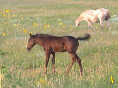 Colt I (mapper-montag) Tags: horses horse newmexico animals colt philmont rayado