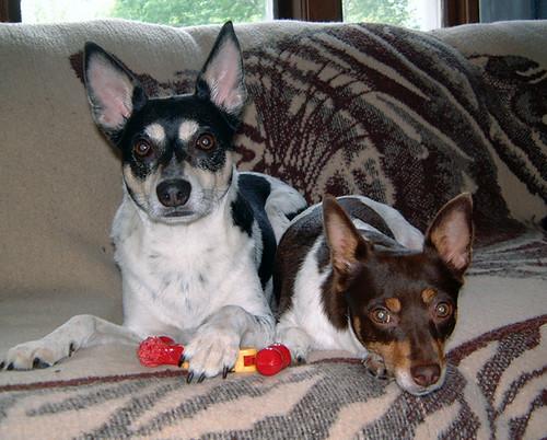 2006-07-04 - DogsDogsDogs-0042