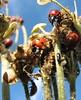 2006_07_17 Isle of Wight Ladybug Partie (Julian & Olya) Tags: ladybird ladybug isle wight 5hits