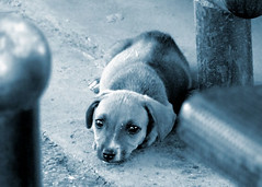 Alone (Aleksandra Radonic) Tags: street bw dog abandoned animal eyes alone sad little serbia thoughtful forgotten lonely balkans emotions contemplation streetshot sadface sadeyes firsttheearth