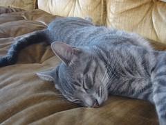 i want kitty!!! (jocelyn tran) Tags: kitty blackandbrown