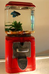Fish Gum (eyewashdesign: A. Golden) Tags: nyc blue red pet house fish color colour green art home water kitchen metal gum golden coin rocks colorful tank thankyou candy bright interior 2006 beta colourful interiordesign gumball gumballmachine betafish productdesign alane alanegolden eyewashdesign