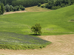 Asti, Piedmont, Italy (ArtistBlood) Tags: italy men nature landscape hill worker farmer piedmont asti flickrunitedaward