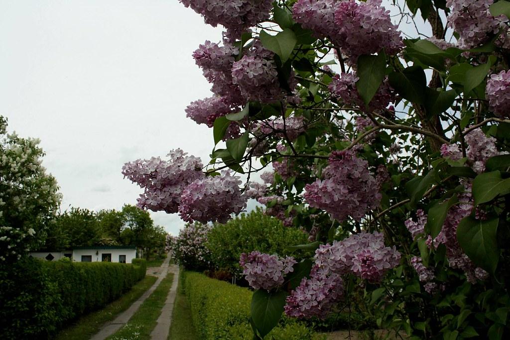 The world 39 s best photos of gartenweg flickr hive mind for Garten neubrandenburg