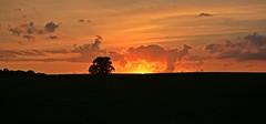 Exploding Sunset (Braden Bygrave) Tags: sunset tree topf25 landscape nikon 50faves 25faves d7100 nikond7100 18140mm