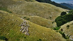 Greece-Serres Paggaion mountain (Dimitris Georgitzikis) Tags: mountain grass sheep herd timeless serres makedonia rodolivos paggaion μακεδονια macedoniagreece