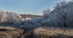 161230_006-152.jpg (Jacky Vastmans) Tags: limburg maasmechelen mechelseheide beriezen bevroren bos cold freezing frozen koud landscape landschap panorama sneeuw sneeuwlandschap snow snowy stilleven vriezen winter winterlandschap wood