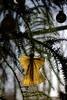 Gotteslob (II) (dididumm) Tags: sunshine sunny christmastree bauble christmasball blue paper angel praiseofgod simple einfach gotteslob engel papier papierengel faltengel christbaumkugel weihnachtskugel blau christbaum weihnachtsbaum upcycling recycling sonnig sonnenschein burgfrieden