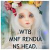 Want to buy Mnf Rendia head (nekomuchuu63) Tags: minifee rendia head wtb wta want buy fairyland bjd doll fa fs