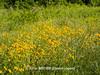 Duke Farms-6142827-2 (myobb (David Lopes)) Tags: dukefarms hillsborough nj newjersey nature olympus em1 omd