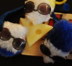 Three blind mice... (nushuz) Tags: mice swisscheese mousetrap threeblindmice sunglasses macro macromondays cheesetheme happymacromonday mycatsfurrymice barbieshades saycheese