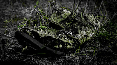 Untitled (#Weybridge Photographer) Tags: chernobyl chornobyl pripyat ukraine nuclear disaster exclusion zone radiation reactor urban decay decaying abandoned discarded adobe lightroom canon eos dslr slr 40d shoe moss overgrown