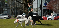Running With The Dogs (swong95765) Tags: park grass dogs exercise woman female lady animals leash city animal outdoor