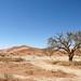 DSC02910 - Namibia 2010 Sossusvlei
