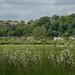 Around Rye, East Sussex (Panasonic GX7, Olympus M. 45mm F/1.8)
