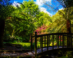 Arched Bridge (JKmedia) Tags: bridge flowers blue trees shadow summer sky white flower green floral silhouette gardens clouds wooden spring cornwall path may bluesky walkway manmade greenery blooms nationaltrust trengwainton pathway cultivated managed rhodadendron arched 2015 canoneos7d boultonphotography
