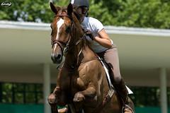 Prueba Social Julio 2015 (Myprofe) Tags: madrid horse salto countryclub rider equestrian showjumping hipica infantaelena saltodeobstculos clubdecampovillademadrid pruebasocial ccvm saltodecaballo