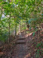 jungle National parc Ko Lanta, Thailand - Dschungel
