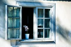 Söderfors, June 27, 2015 (Ulf Bodin) Tags: light summer orchid building window wall se open sweden surreal orchidaceae sverige söderfors orkidé uppland storgatan uppsalalän canoneos5dmarkiii canonef70200mmf28lisiiusm