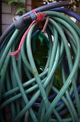 おニョロ子クラブ (twinleaves) Tags: blue red green tokyo purple hose d5100