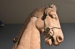 Forepart of a horse from the Mausoleum of Halicarnassus, ca. 350 BCE (2) (Prof. Mortel) Tags: london mausoleum britishmuseum halicarnassus