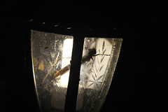 IMG_7106(1) (The World Through My Lense) Tags: light india lamp night insect scary large creepy maharashtra bhandardara