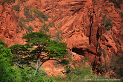 20161207_6102 (Daniel Beams) Tags: bolivia santacruzdelasierra santa cruz south america tree rocks cliffs red