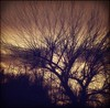 Longevity (dianealdrich - Please read my profile) Tags: longevity aged aging tree oldtree branches treebranches spectacular silhouette silhouettephotography enormous endurance enduring autumnscene autumn nature ♥naturelover♥
