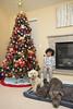 (nanceyuille) Tags: 2016 christmas xmas holiday merrychristmas dogs pups puppies pitbull yorkiepoo cockerpoo