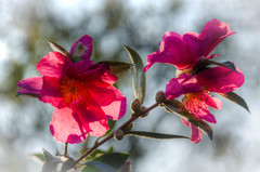 Tableau floral.jpg (BoCat31) Tags: