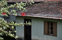 Vacation time!! I'll be back in February (Ruby Ferreira ®) Tags: dof branches roofs telhados flôrdehibisco galhos window janela rainyday rain chuva hibiscusflower