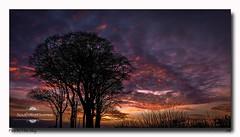 Fire In The Sky (jeremy willcocks) Tags: sunset fire sky devon colour tree dusk twillight fujixt10 xf1024 jeremywillcocks wwwsouthwestscenesmeuk south hams southhams