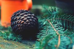 3rd Advent (Maxi Winter) Tags: advent avent tannenzweig zweig twig tannenzapfen zapfen cone cône xmas christmas christmasdecoration outdoors branches fir sapin fichte spruce adventsdeko deko noël