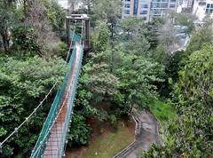 Rainforest in the City (mikecogh) Tags: kualalumpur rainforest kl ecopark suburban swingbridge