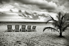 Beach (Neal J.Wilson) Tags: beaches blackandwhite maldives bnw coasts coastlines shorelines palmtrees palms palmbeach sunbeds chairs sunchairs indianocean clouds sky empty travel asia nikon d3200