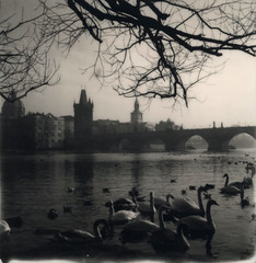 P069 (charlesguerin) Tags: prague impossibleproject bw charlesbridges landscape vltava sx70 model2 swan tree oldtown