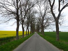 Pomerania (bogdan_de_varsovie) Tags: polska poland europa europe pomorze pomerania droga road drzewa trees krajobraz landscape pole field outdoor plant drzewo tree