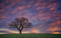 Sky Fall (Captain Nikon) Tags: melbourne melbournehall rural cropfield sundown lonetree lonesometree longexposure skeleton silhouette nikond7100 sigma1835mmf18 srb10stopfilter bigstopper derbyshire eastmidlands beautifulmoments vanguardalta283tripod cloudmovement winter winterlandscape favouriteplaces moody explore explored