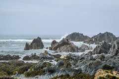 Out to Sea (ChrisRTonks) Tags: sea ocean british coast beach rocks waves seaside seaweed landscape crash