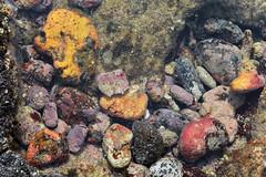 Tidepool encrusted coral and lava rocks (Remember To Breathe) Tags: tidepool tidepools rocks coral lavarocks color colorful