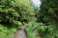 scotland uk whw westhighlandway forest path