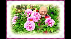 me and my tree peonies, my tree peonies and me. (milomingo) Tags: pink plant man flower male me garden myself botanical peony organic mygarden effect horticulture treepeony theworldinpink
