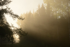 Ray of light (anderbomower) Tags: road morning light sun nature yellow fog forest dawn ray