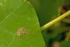 Caterpillars hatching