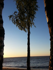 Sunset (presteza777) Tags: trees sunset sea summer sky costa stpetersburg evening coast mar tramonto nuvole samsung ciel cielo fotografía puestadelsol закат coucherdusoleil море береза берег thegulfoffinland финскийзалив golfedefinlande golfodefinlandia golfodifinlandia nuabes