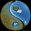 Yin-Yang (Photo Extremist) Tags: world ocean blue trees sea two sky panorama beach water clouds oregon circle landscape photography peace hole symbol artistic wind earth geometry creative ground 360 philosophy calm round planet land duality trick dual yinyang tao 360x180 taoism dichotomy stereographic dependant dualism ptgui taijitu